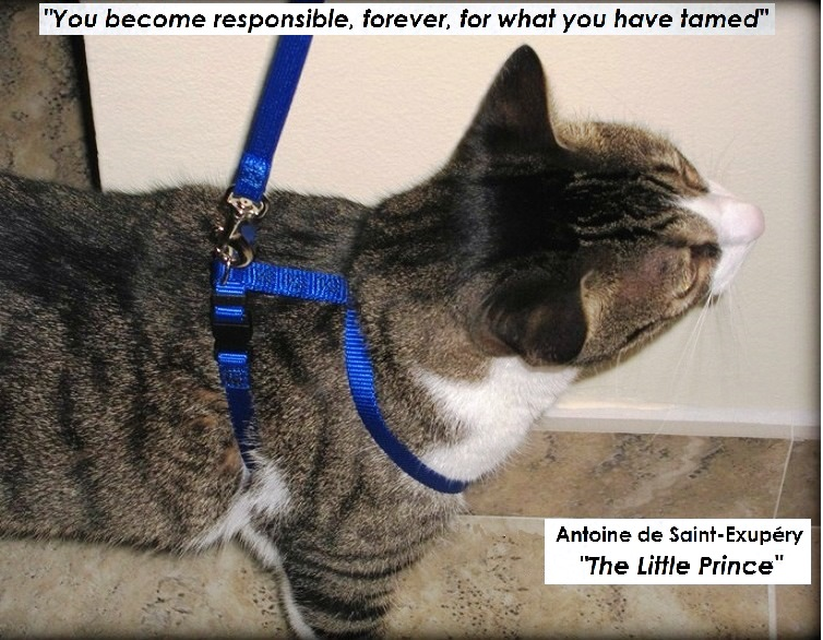 The Purrfect World of Port Moody: Cat Owner Responsibilities